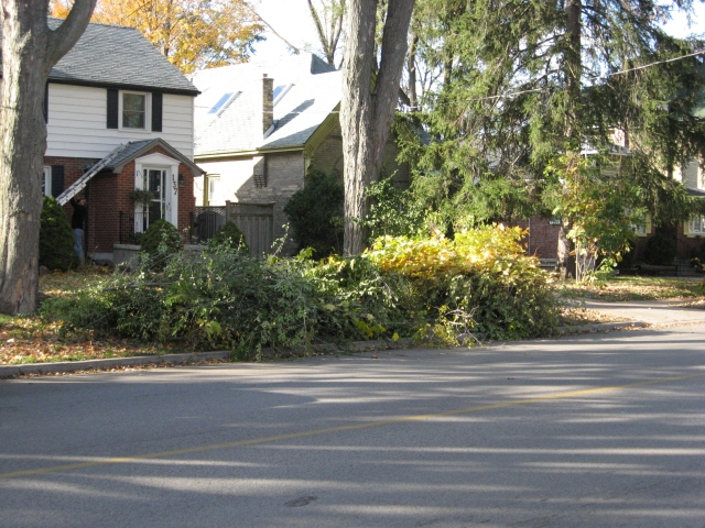 tree clean up from a windstorm a few years ago